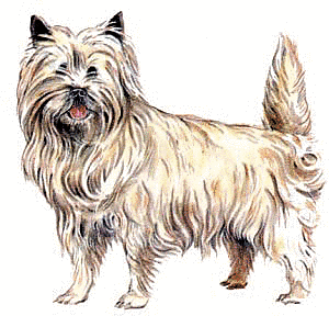 Cairn Terrier - Mobile Vet Service - MobileVetService.net