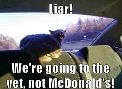 We're Going to the Vet Instead of McDonalds