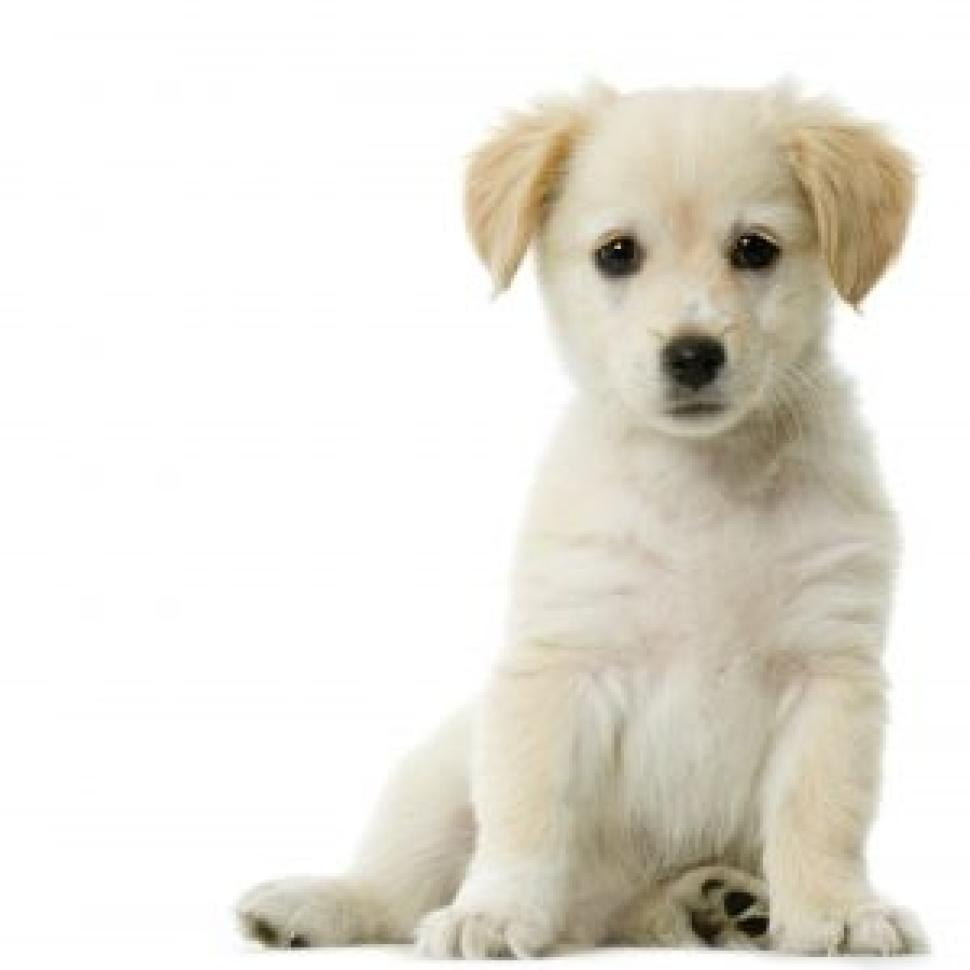 Dog and Puppy Preventive Care