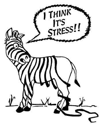stressed-zebra